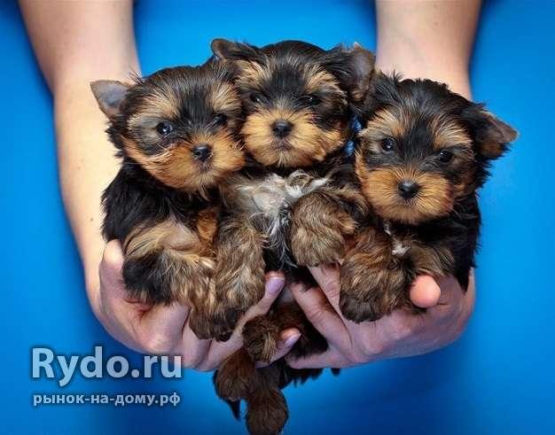 Опытный инструктор по вязке/случке собак всех пород — Цена ...