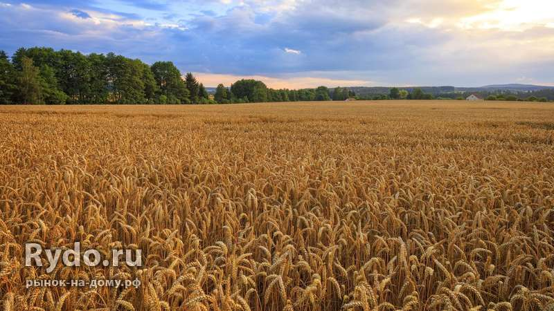 земельные паи сельхозназначения цена