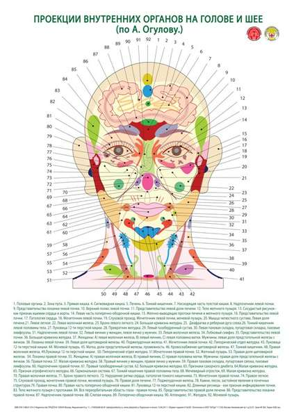 Проекция органов на теле по а огулову