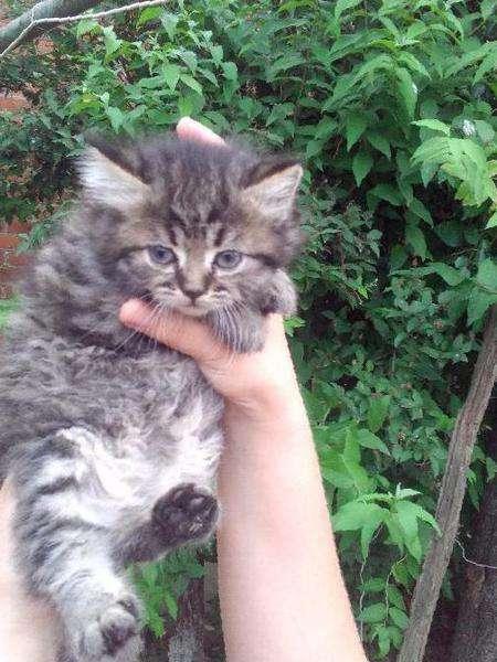 котята дворовые фото