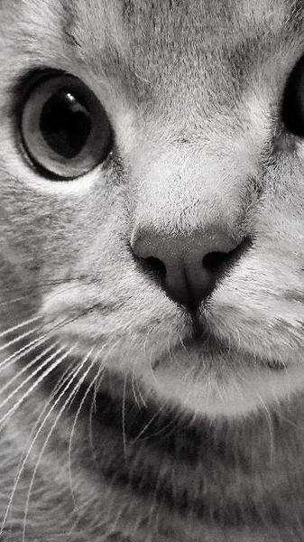 Коты для вязки махачкала