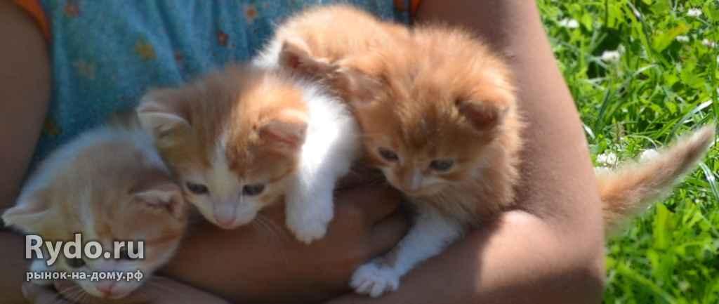выбрать котята в добрые руки в узловой на авито фуфайка techwool
