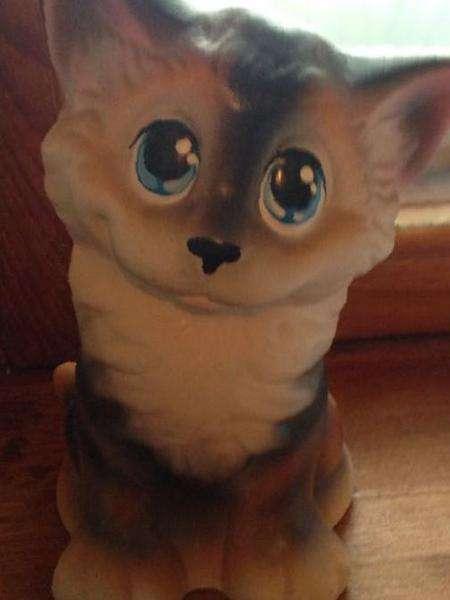 Кот майкоп цена