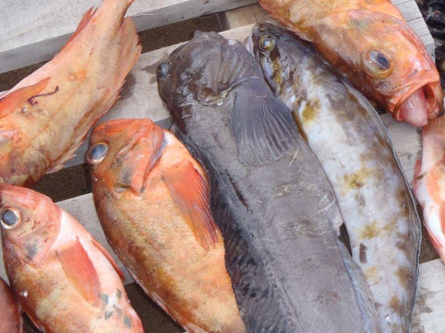 морская рыбалка выход из мурманска